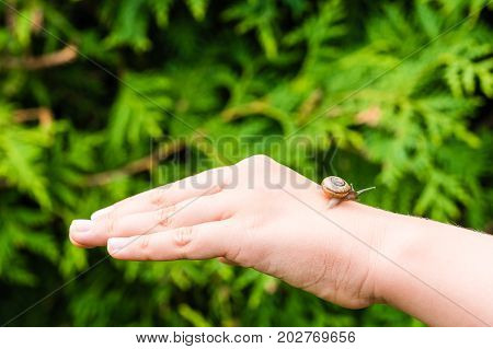 Small Snail Crawling On Hand