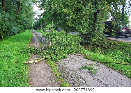 tree broken by a storm lies on the road on summer day
