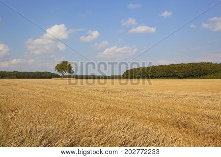 Stubble Field And Woodland