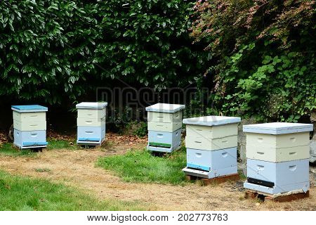 Bee hives home for honeybees and the honey they make