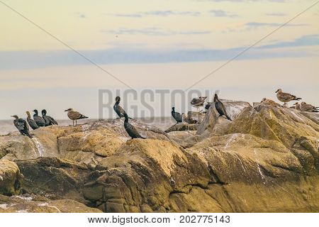 Group Of Birds At Rocks, Montevideo, Uruguay