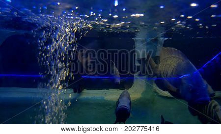 Boy and girl drowned underwater. Car auto accident the underwater drowned people