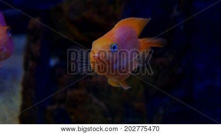fish underwater in ocean. Fish swim in video sea of beautiful ocean