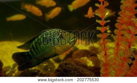 fish underwater in ocean. Fish swim in sea of beautiful ocean video 4k