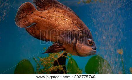 fish beautiful underwater in ocean. Fish swim in sea of beautiful video 4k ocean