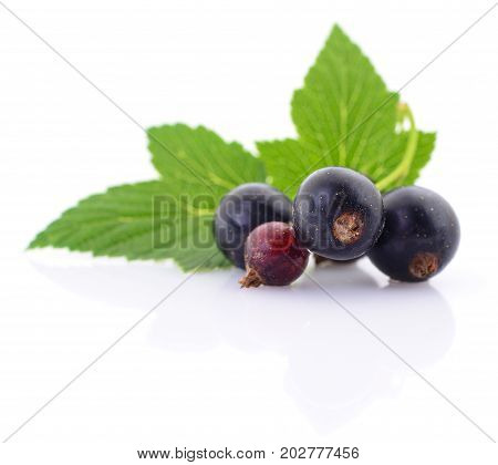 Four black currants with leaves on a white background