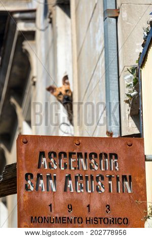 Sign for the San Agustin Ascensor in Valparaiso Chile with a dog in the background