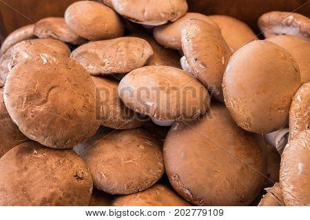 fresh portobello champignons for sale at city farmers market