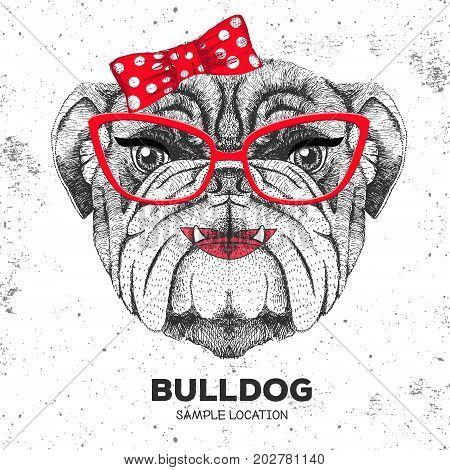 Retro Hipster animal bulldog. Hand drawing Muzzle of animal  bulldog. Girl of 60s