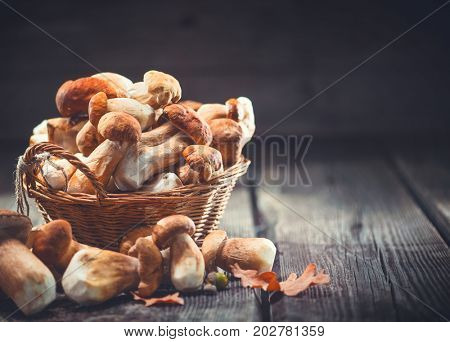 Mushroom Boletus over Wooden Background. Autumn Cep Mushrooms. Ceps Boletus edulis over Wooden Dark Background, close up on wood rustic table. Cooking delicious organic mushroom. Gourmet food