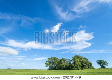 Group Of Trees On A Green Field In The Summer