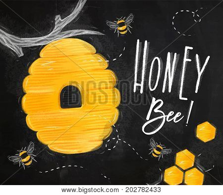 Poster illustrated bee hive honeycombs lettering honey bee drawing on chalk background