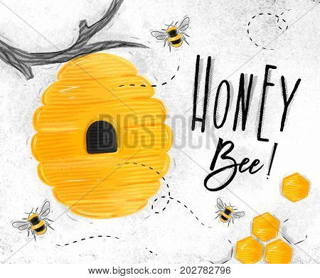 Poster illustrated bee hive honeycombs lettering honey bee drawing on dirty paper background
