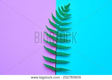 Floral Leaves Fashion Concept. Fern Tropical Leaf. Vivid Design. Art Gallery. Creative Bright Color. Minimal Style. Green Summer fashion