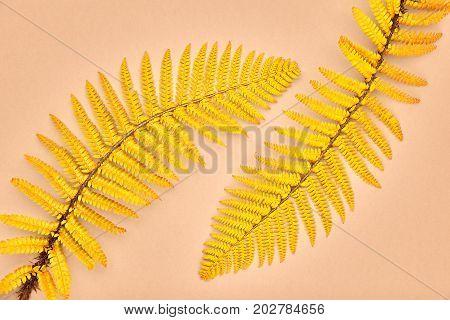 Autumn Arrives. Fall Leaves Background. Fern Leaf Fashion Design. Art Gallery. Minimal. Yellow fern Leaf on Yellow. Autumn fall fashion. Vintage Concept