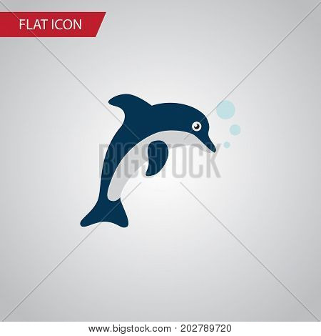 Playful Fish Vector Element Can Be Used For Dolphin, Playful, Fish Design Concept.  Isolated Dolphin Flat Icon.