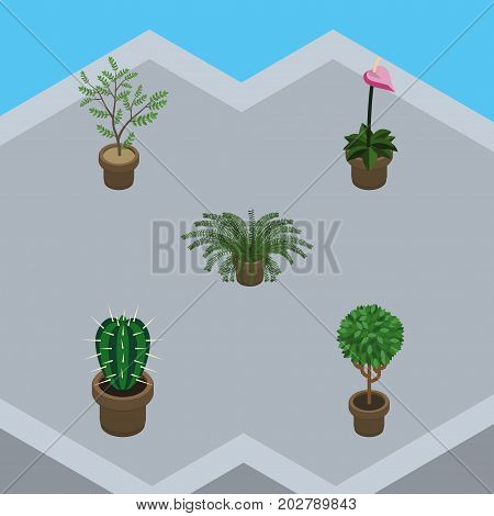 Isometric Flower Set Of Grower, Fern, Tree And Other Vector Objects