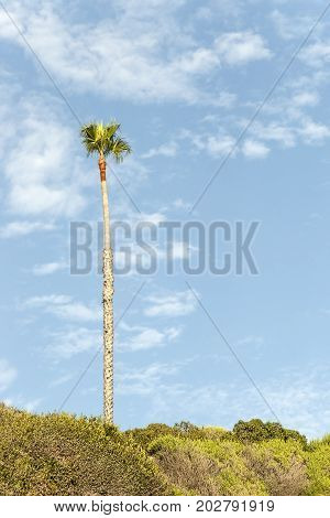 Lonely Palm Tree on Blue Sky Background