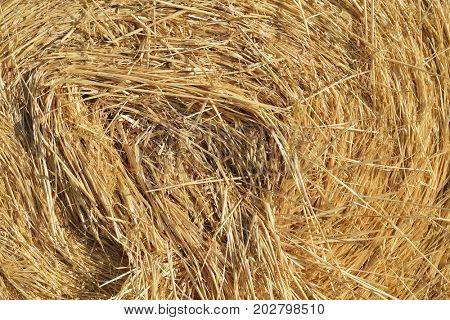 Haystack, detail. Stack of straw.