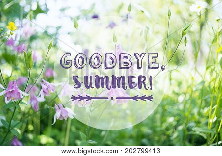 A background with pink aquilegia flowers in a garden and the text