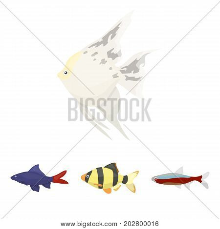 Angelfish, common, barbus, neon.Fish set collection icons in cartoon style vector symbol stock illustration .