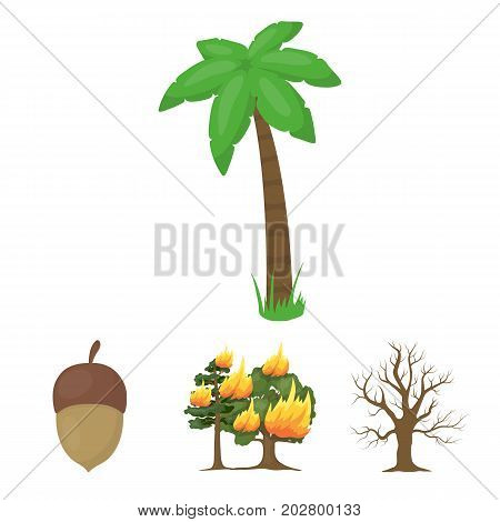 Burning tree, palm, acorn, dry tree.Forest set collection icons in cartoon style vector symbol stock illustration .