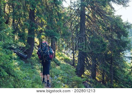 Adventurer Goes With Big Backpack Through Dense Green Forest