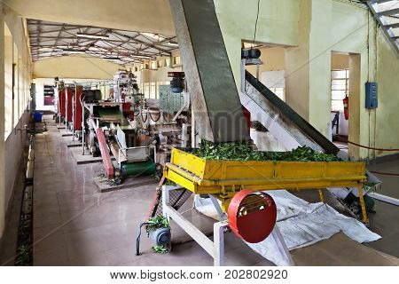 Tea Factory, India