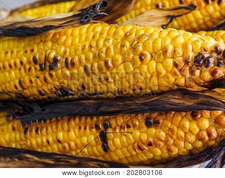 Corn on the cob grilled on barbecue with charred kernels to a rustic look