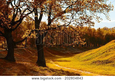 Autumn landscape of city sunny autumn park with golden autumn trees. Autumn park scene in sunny weather. Sunny autumn landscape scene with autumn trees lit by soft sunshine