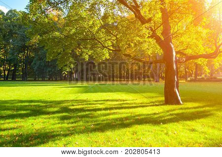 Autumn trees in the park in nice sunny autumn weather. Autumn landscape scene with autumn maple tree in the autumn park. Sunset autumn landscape view. Colorful autumn nature