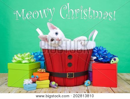 white kitten with heterochromia or odd-eyes. One blue 1 yellow green sitting in red christmas basket surrounded by colorful presents laying sideways playfully looking at viewer. Merry Christmas text.