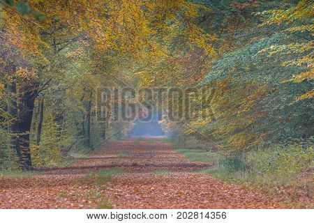 Autumn Lane With Beech Trees With Colorful Leaves