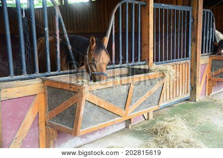Horses in stable are eating grass, note  select focus with shallow depth of field