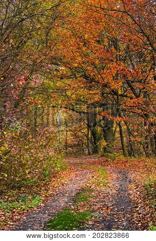 Dirt Road In Forest With Reddish Foliage