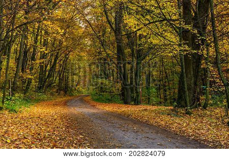 Asphalt Road Through Forest In Yellow Foliage