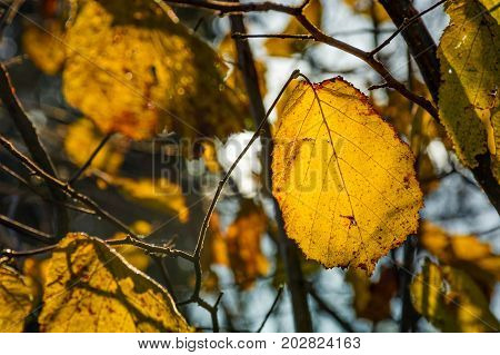 Yellow Leaf On The Twig In Autumn Forest