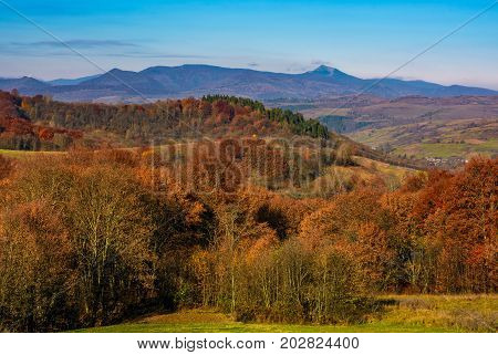 Forest With Red Foliage On Hills In Countryside