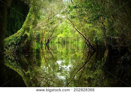 Wonderful Vietnam landscape at Mekong Delta row of tree reflect on water canal through melaleuca forest nice scenery with entrance gate to heaven make wonderful place for ecotourism poster