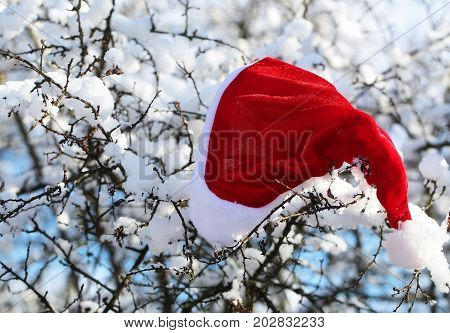 Holidays celebration concept. xmas and new year. Christmas landscape with santa claus cap. Santa red hat on snowy branch. Winter forest with white snow on trees.
