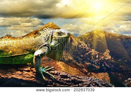 Agama hydrosaurus on the background of a mountain landscape