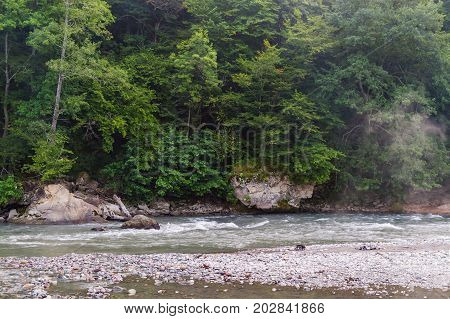 Evergreen Forest Overview In Adygea