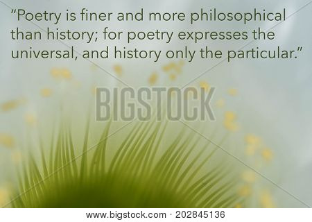 Inspirational quote by ancient Greek philosopher on floral background