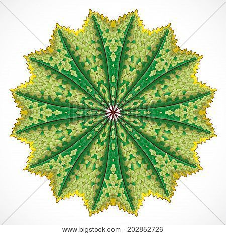 Abstract colorful leaf ornament. Illustration 10 version