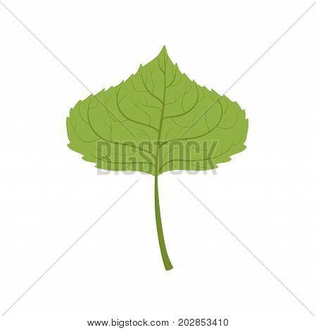 Aspen tree green leaf vector Illustration on a white background
