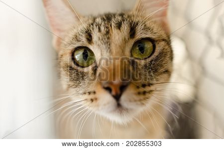 Cat Tabby eyes is a Tabby cat looking right at you with it's great big green eyes.
