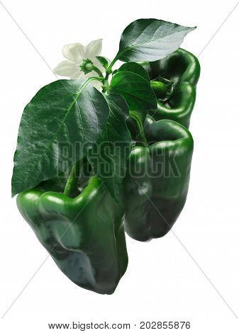 Ancho Grande Chiles On Plant, Path