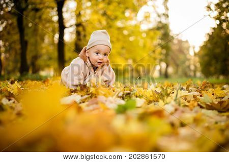 Toddler crawling on fallen maple leaves in park