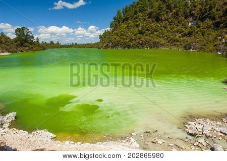 Green Ngakoro Lake in Waiotapu geothermal area, New Zealand