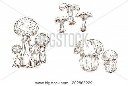 Mushrooms orange cap boletus fly agaric and chanterelles contoured. Brow contour. Vector
